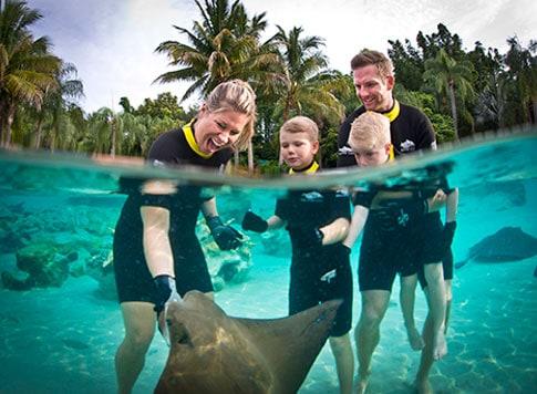 Atrações do Discovery Cove - Nado com tubarões e arraias