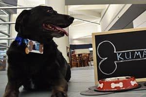Labrador vira embaixador de Aeroporto de Orlando nos EUA